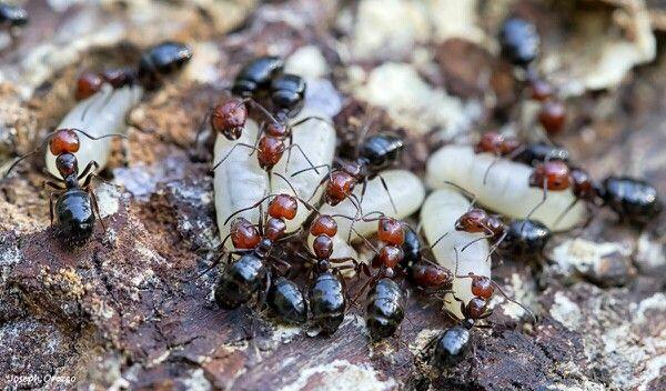Fourmiz #macro #insect #nature