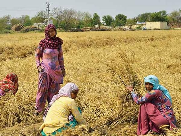 Haryana's Rewari: Distressed farmers hope for a future beyond agriculture for the next generation - The Economic Times