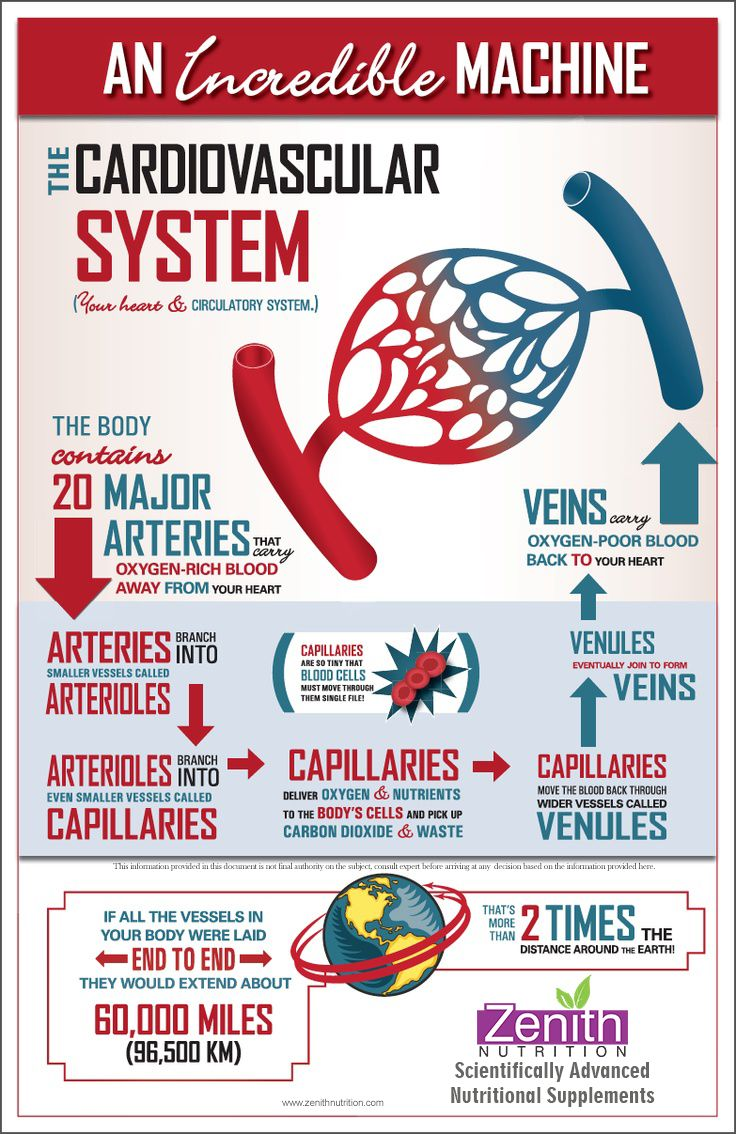The human circulatory system keeps blood oxygen and nutrients flowing through the body A description of the circulatory systems function organs and