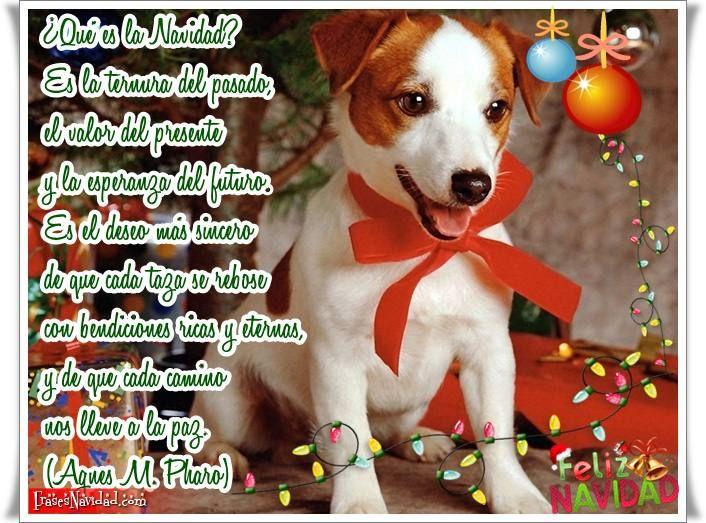Frases para Navidad con un perrito y guirnalda de luces » http://frasesnavidad.com/frases-para-navidad-con-un-perrito-y-guirnalda-de-luces/