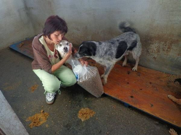 Why She'd Walk Through Fire for Romanian Dogs