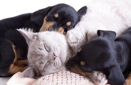 Gli animali domestici sono un aiuto per la nostra salute.