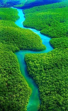 The Amazon Rainforest, Brazil-10 Worlds Amazing Forests