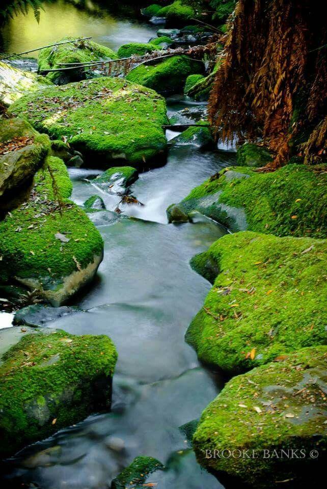 Mole creek