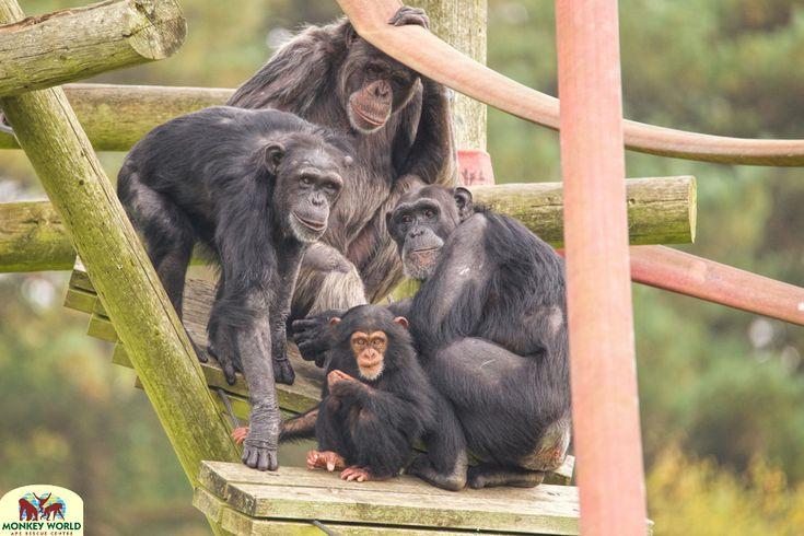 A family affair at Monkey World, Dorset
