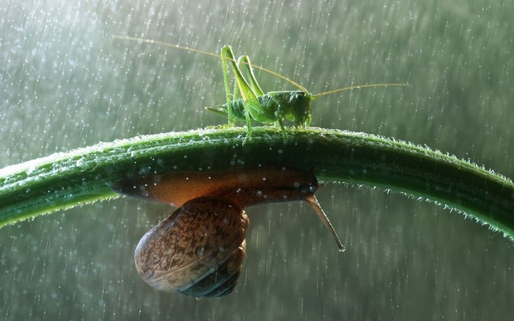 Picture Proof Snails are Incredible, Philosophical Creatures  Welcome to the world of macro snail photography