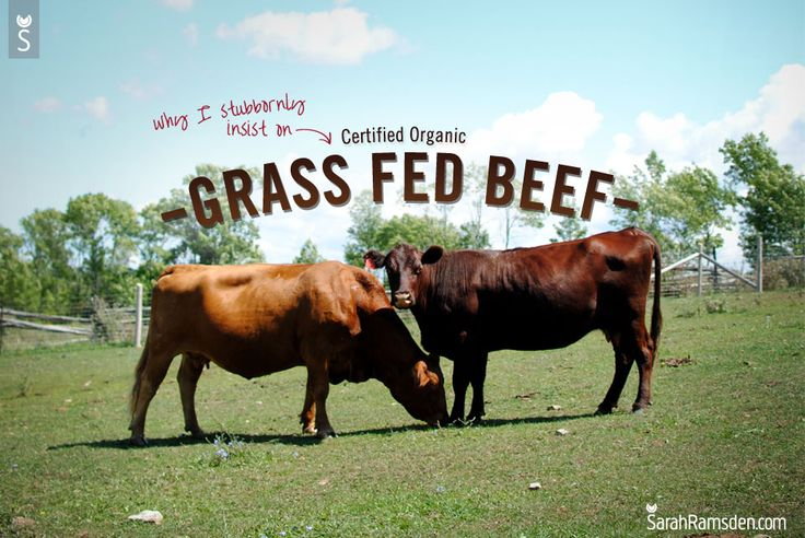 These local Ontario cows are 100% grass fed year round. How do I know? I worked on the farm that raises them with such love, and attention. I would amble through the pasture to find the herd, having passed fenced off areas designed to better manage the pasture, and rotate the grazing of the cattle. …