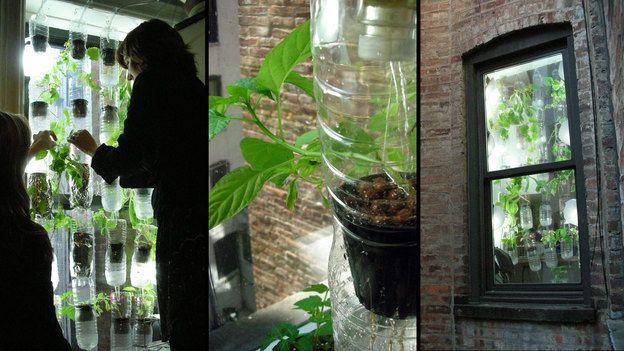 Window Farming: Plastic Bottle, Recycled Bottle, Green Thumb, Water Bottle, Veggies Ventur, Farms Projects, Urban Gardens, Sodas Bottle, Window Farms