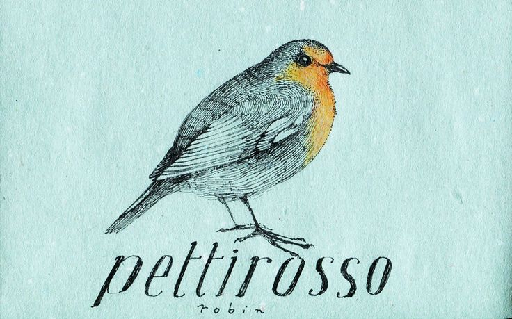 Learning Italian Language ~ Pettirosso (robin) IFHN