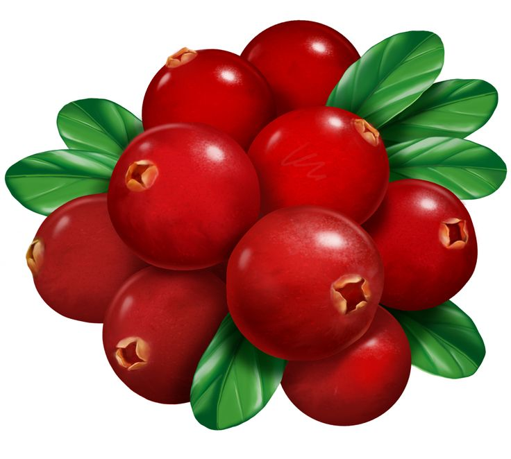картинки ягодки брусничка опиум