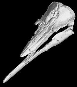 Misterio y Ciencia Hoy: Descubren un mamífero extinto con una anatomía úni...