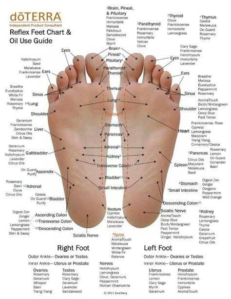Essential Oils Foot Reflexology Application Chart