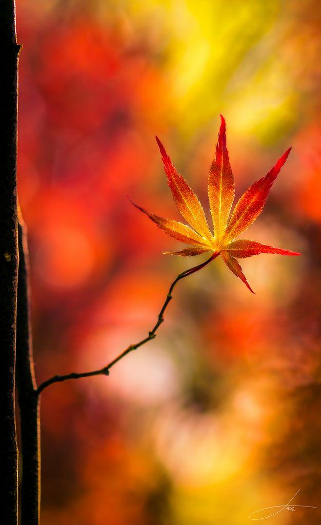 ~~Illuminated Leaf | autumn leaf bokeh by Jack Hood~~