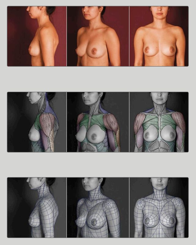 Female muscles from Anatomy for Sculptors