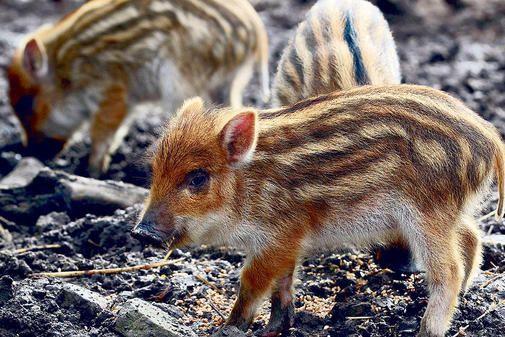 Tierpark Hardegsen soll noch attraktiver werden