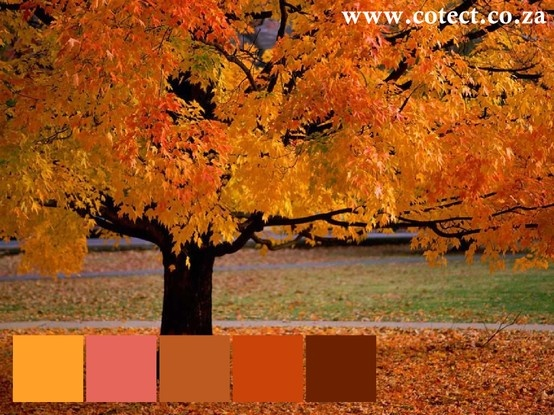 The #Colour Palette for the week is Autumn. Rich hues that can be contrasted with pink.