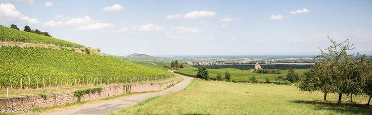 Mike Y. Gyver ( Organize in Albums) posted a photo:  17 kilomètres à pied ou en VTT, à travers les 6 communes du vignoble, voici l'itinéraire proposé par le Sentier viticole des Grands Crus, à faire en circuit complet ou par boucles communales d'1 à 2 heures.  Découvrez le monde de la vigne et de ses travaux sur 7 des plus grands lieux-dits viticoles alsaciens (Marckrain, Sonnenglanz, Mandelberg, Schoenenbourg, Sporen, Froehn, Rosacker). Une balade balisée et enrichissante ponctuée…