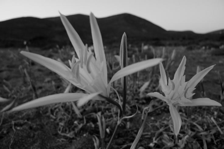 """""""Απειλητικά άνθη"""" από τον Μιχάλη Καστερνούδη"""