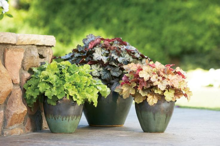 Explore the diversity of plants that will love living in a cozy planter in the shade.