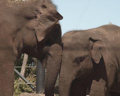 #elephant #love #cute #animals
