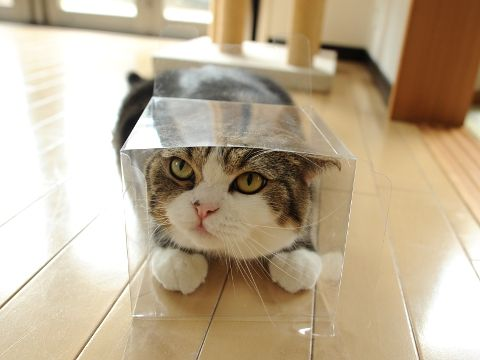 I love this cat. Check out Maru the cat on Youtube!
