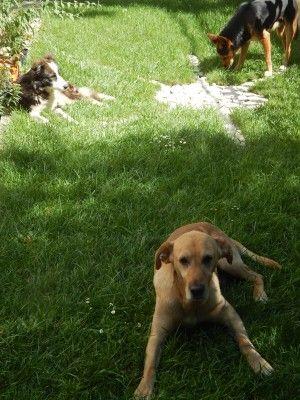 ZooZoo - Vili - kutya - keverék