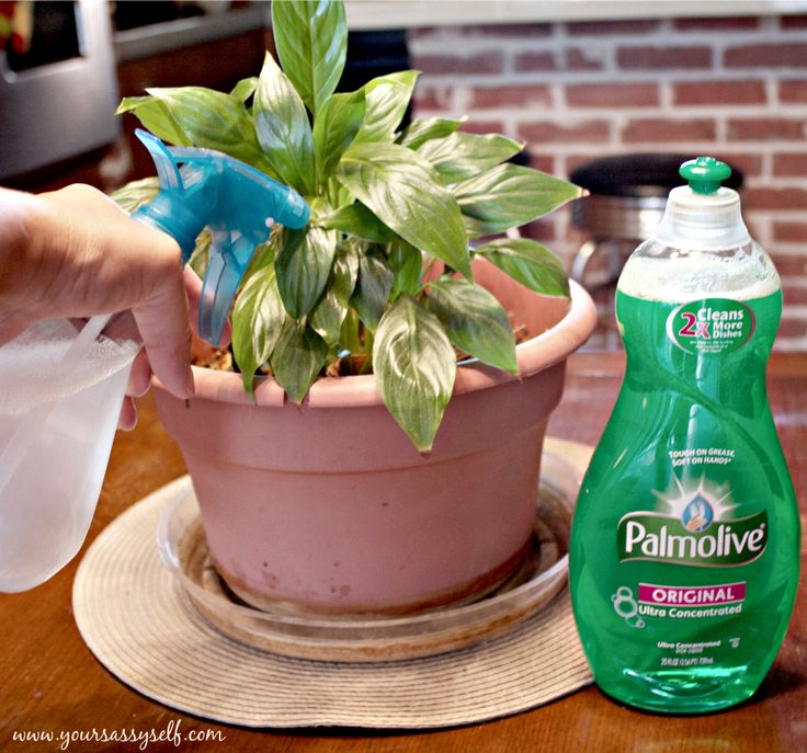 Check out the other uses for Palmolive Dish Soap.  It's Not Just for Dishes Anymore #Palmolive25Ways #cbias » YourSassySelf.com