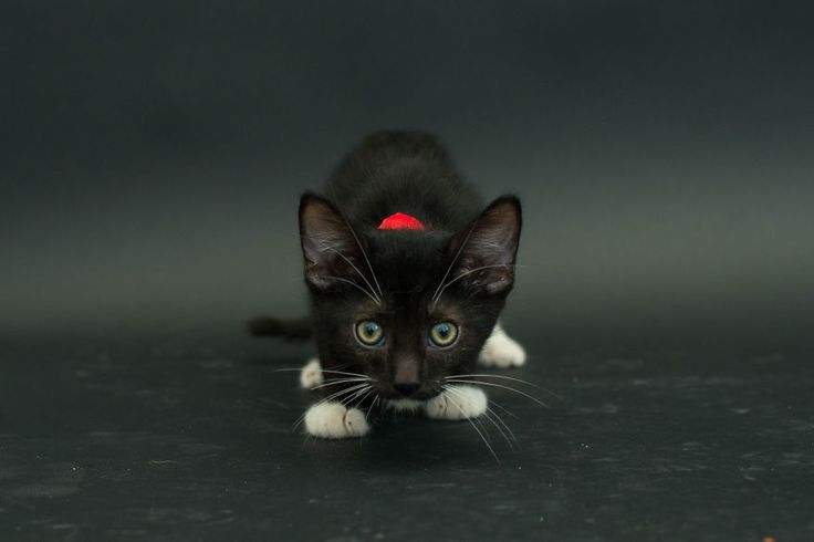 Black cats are usually the last to get adopted at shelters, and are often euthanized as a result...