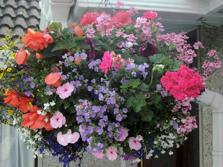 Hanging Flower Baskets Calgary : Best images about hanging baskets on