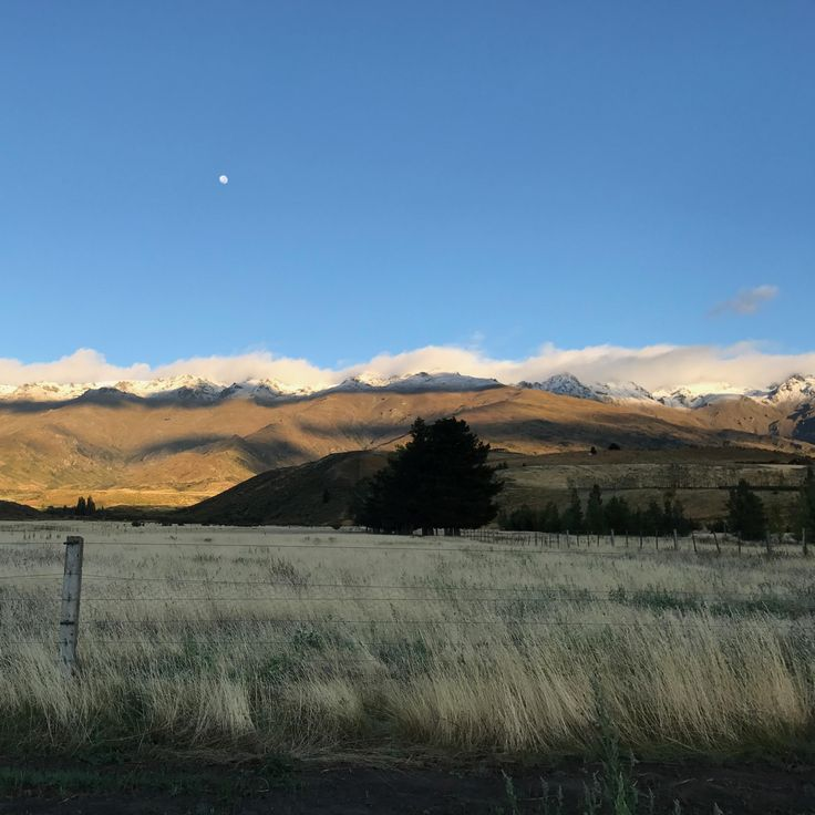 Hello & goodbye summer. Early morning shot at the back of Block 12.  #amisfield #pisa #centralotago #converting #nzwine #lastdayofsummer