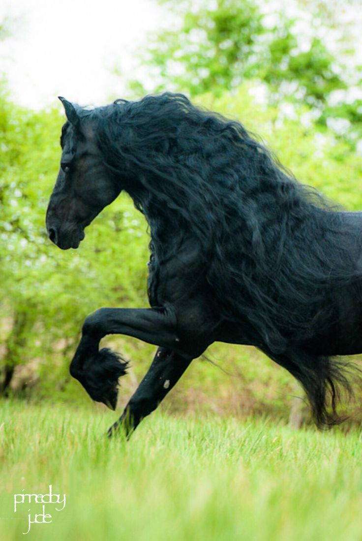 die besten 25 pferde bilder ideen auf pinterest lustige pferde pferd bilder und lustige. Black Bedroom Furniture Sets. Home Design Ideas