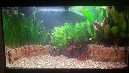 39 . Opnieuw mijn aquarium aan het inrichten nadat een bacterie de ...