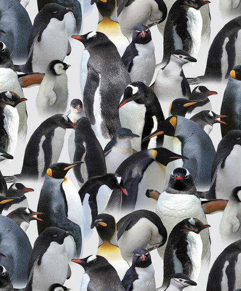 Rapport design The pinguines - www.surfacesdesign.ru