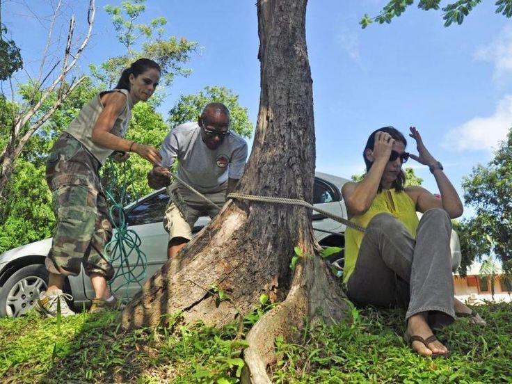 Movimiento ambientalista panameño, luchando por la defensa de los árboles de la ciudad capital.