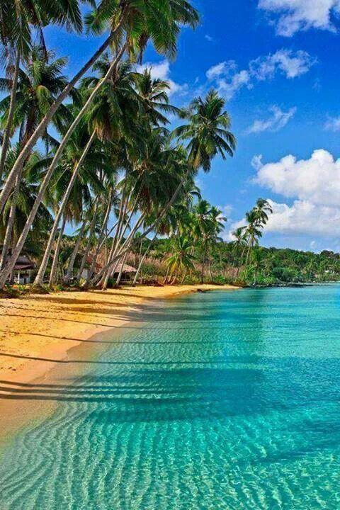 Serene beach and palm trees