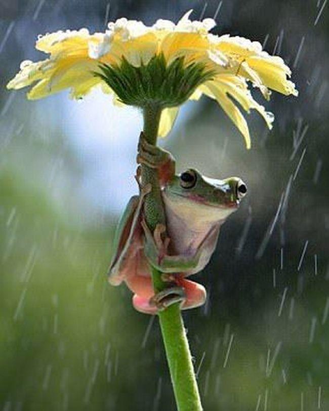 У нас дождь картинки прикольные