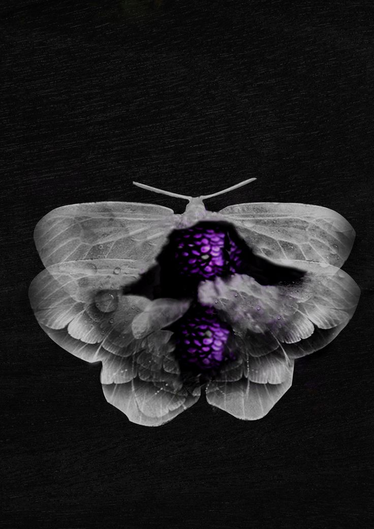 moth by zumzzet