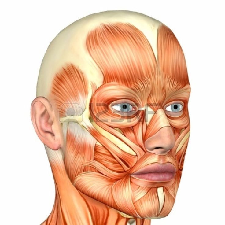 12744702-illustration-of-the-anatomy-of-the-male-human-face-isolated-on-a-white-background.jpg (1350×1350)