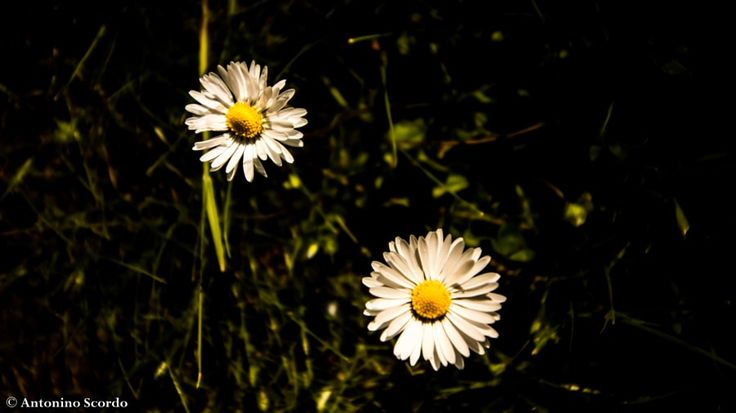 Spring http://ift.tt/2bhah5M http://ift.tt/2aUr3JO http://ift.tt/2aSDkLq #nature #photography #wildlifephotography
