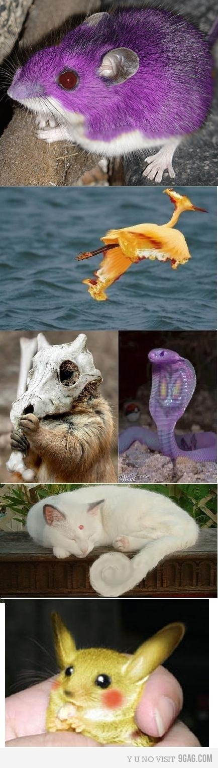 They are real !!
