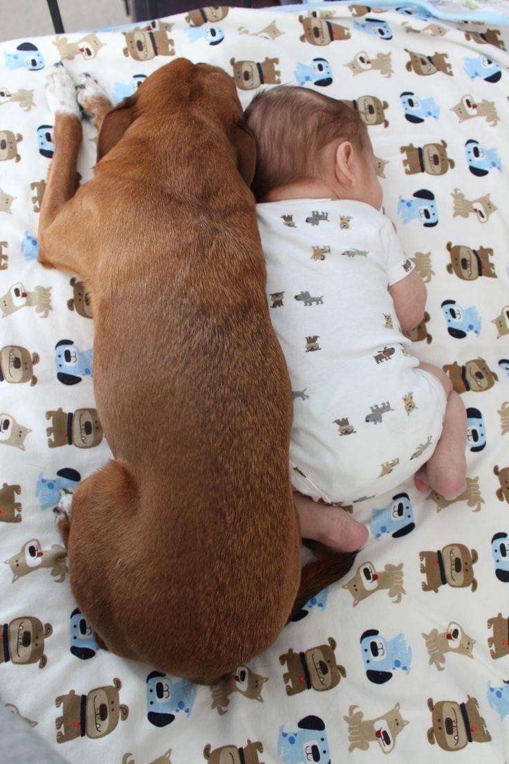 best sleep baby sleep images on pinterest newborn pictures