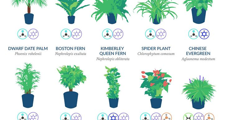 NASA Reveals A List Of The Best Air-Cleaning Plants For Your Home | Bored Panda