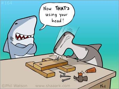 #sharks