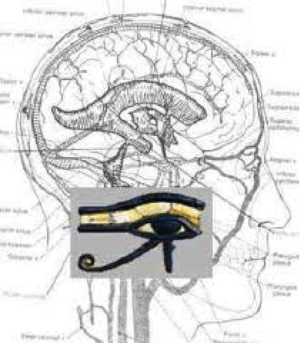Pineal Gland: Portal of Higher Dimensions | RiseEarth