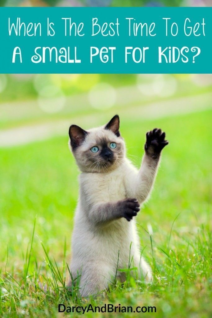How To Know Your Kids Are Ready For A Small Pet Small Pets Animals For Kids Small Pets For Kids