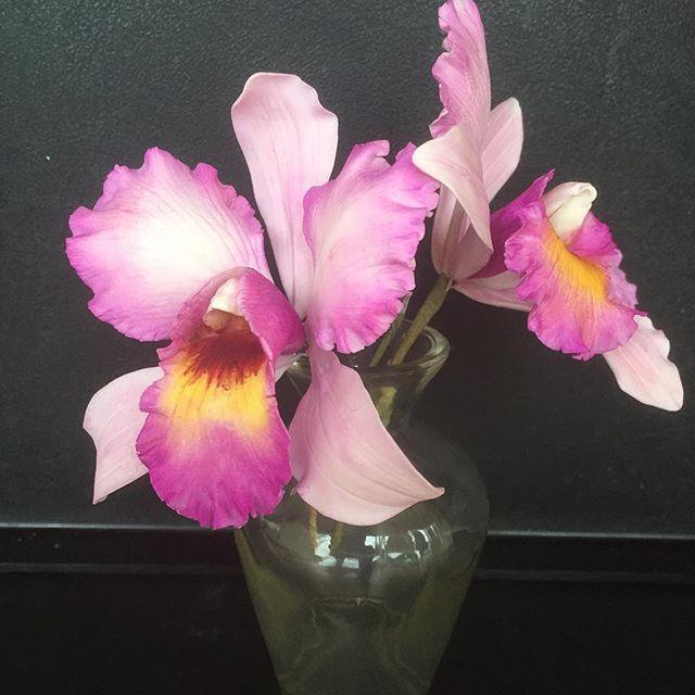Cattleya Orchid Sugar Flowers Gumpaste Gumpasteflower Flowersofinstagram Flower Melbournecakes Sugarart Sugar Flowers Glass Vase Flowers