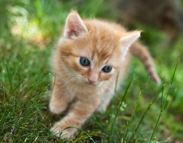 orange kitten names Cute Cats Pictures kittens