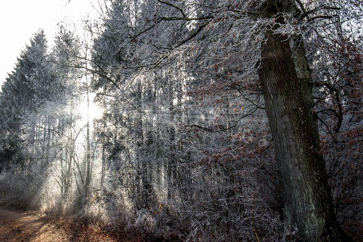 ... noch ein kaltes Winterbild