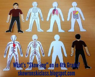 Human Body Paper Craft--layer the body systems and make a little paper man!