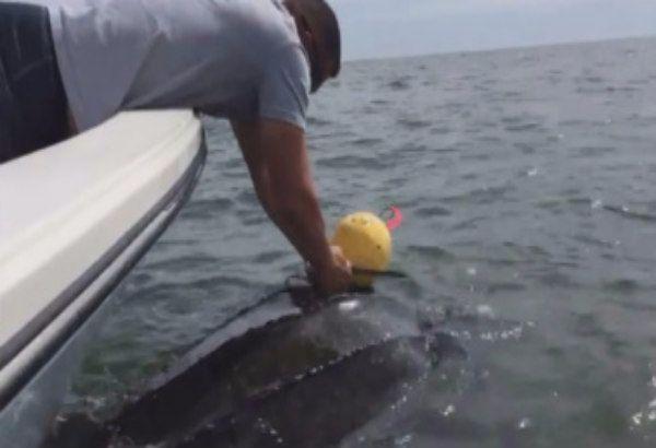 Teneri cuccioli Notizie: Florida, tartaruga marina gigante impigliata in un...